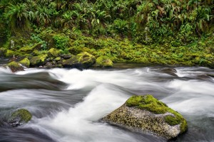 Sweet Creek, Siuslaw River Basin, Lane County